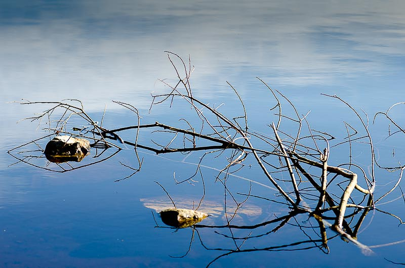 Water and branch