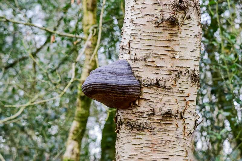 Fungus on a tree