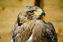 Muncaster Castle Hawk And Owl Centre
