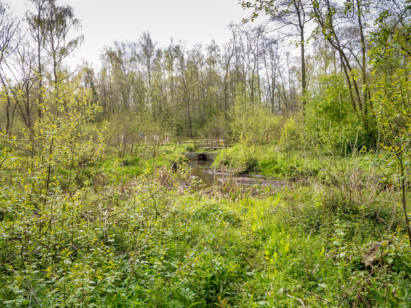 nature reserve on 10 may